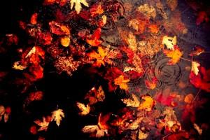 beautiful leaves wallpaper