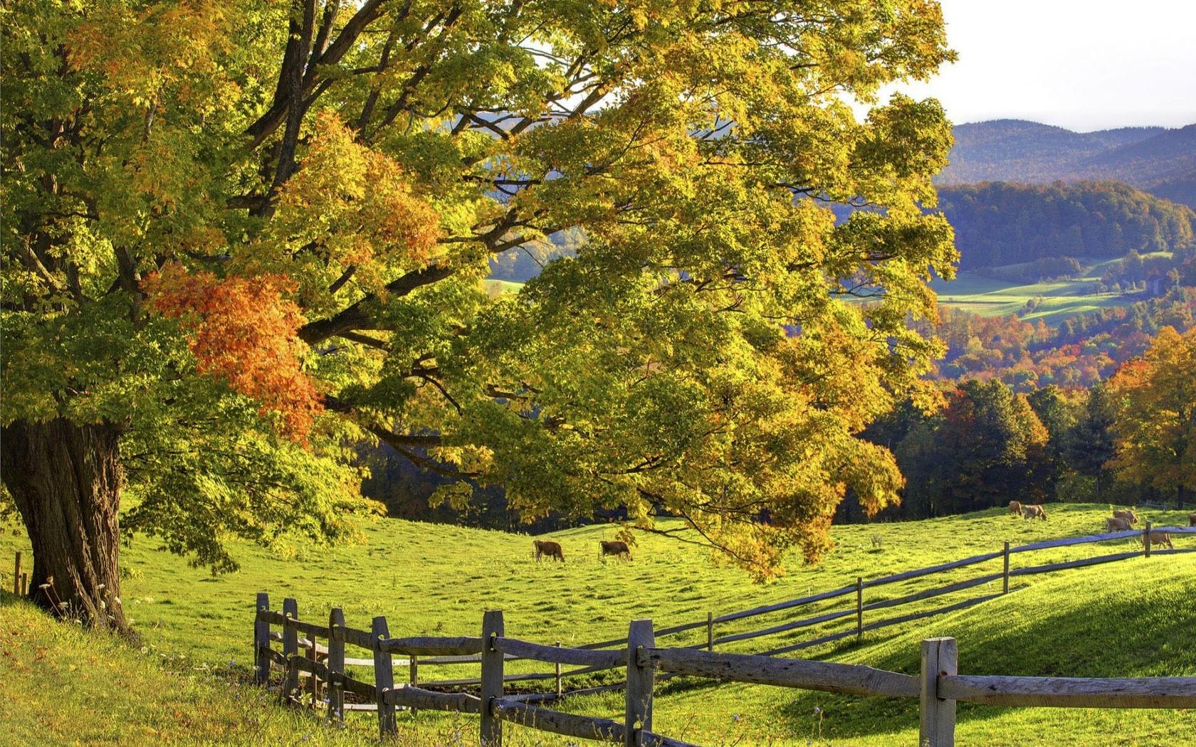 beautiful meadow wallpaper