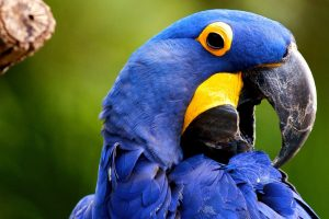 beautiful parrots images