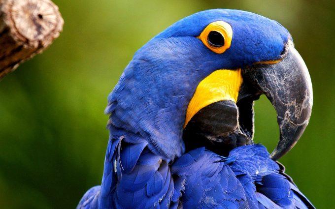 beautiful parrots images