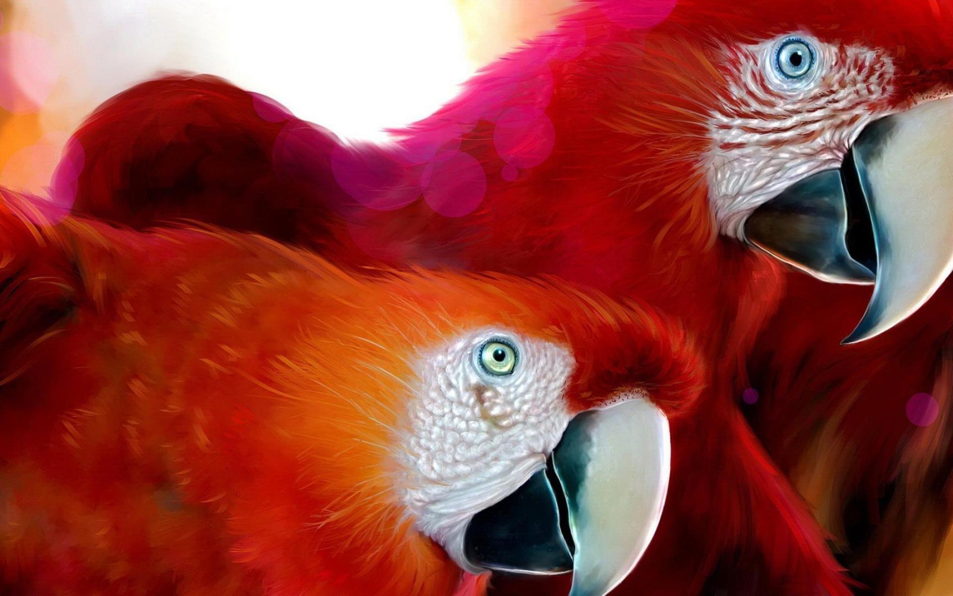 beautiful parrots pictures