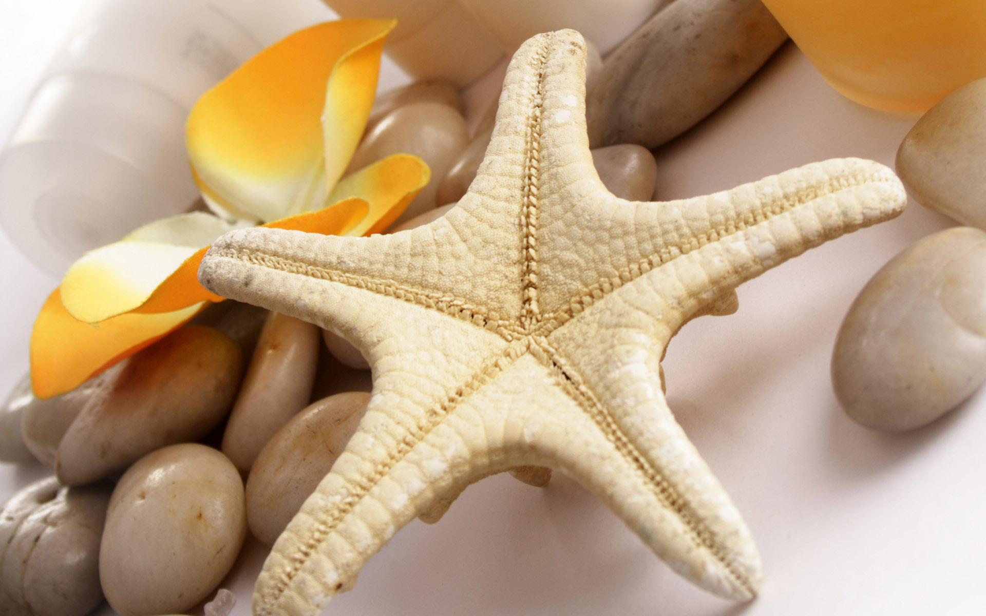 beautiful picture starfish