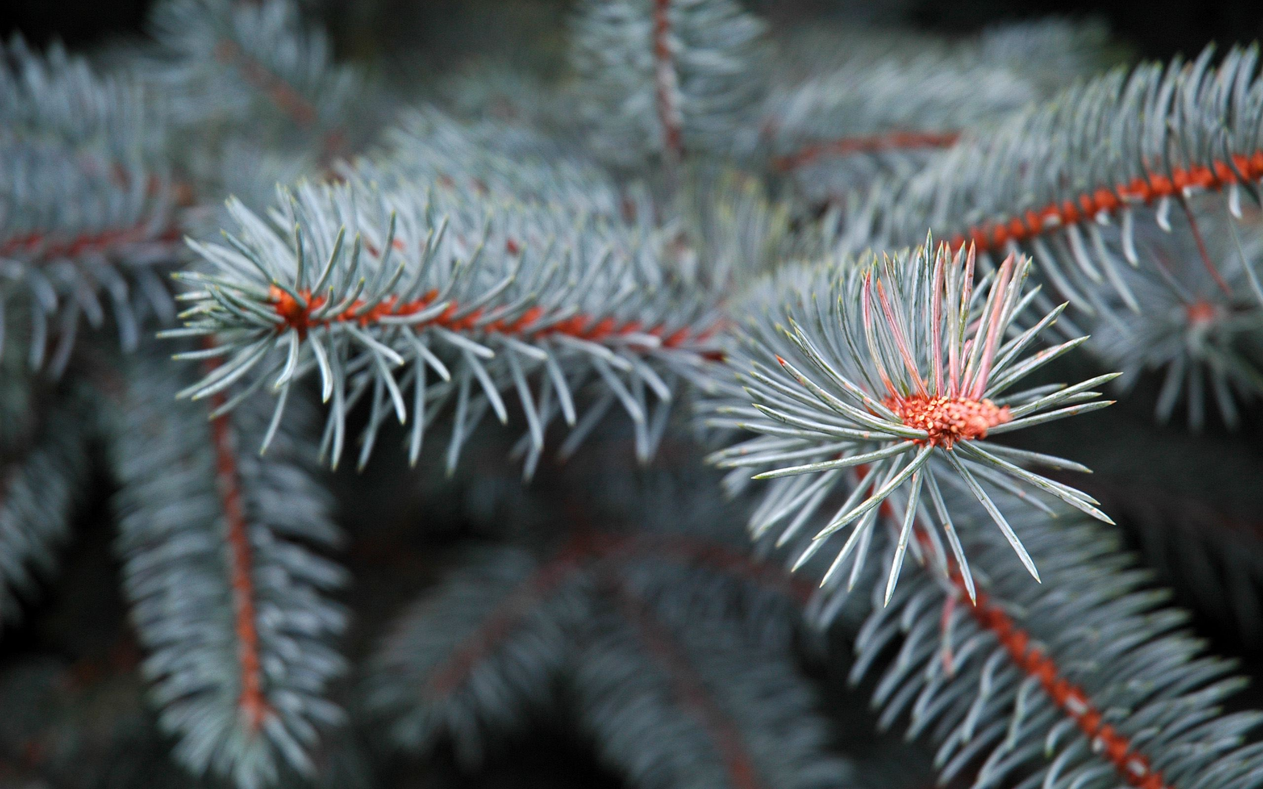 beautiful pine pictures