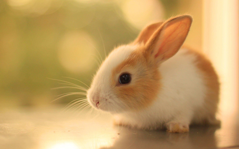 beautiful rabbit pictures