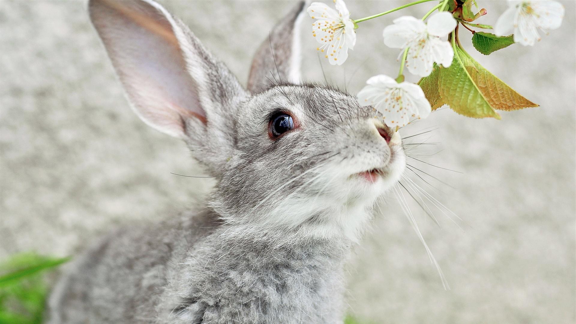 beautiful rabbits images