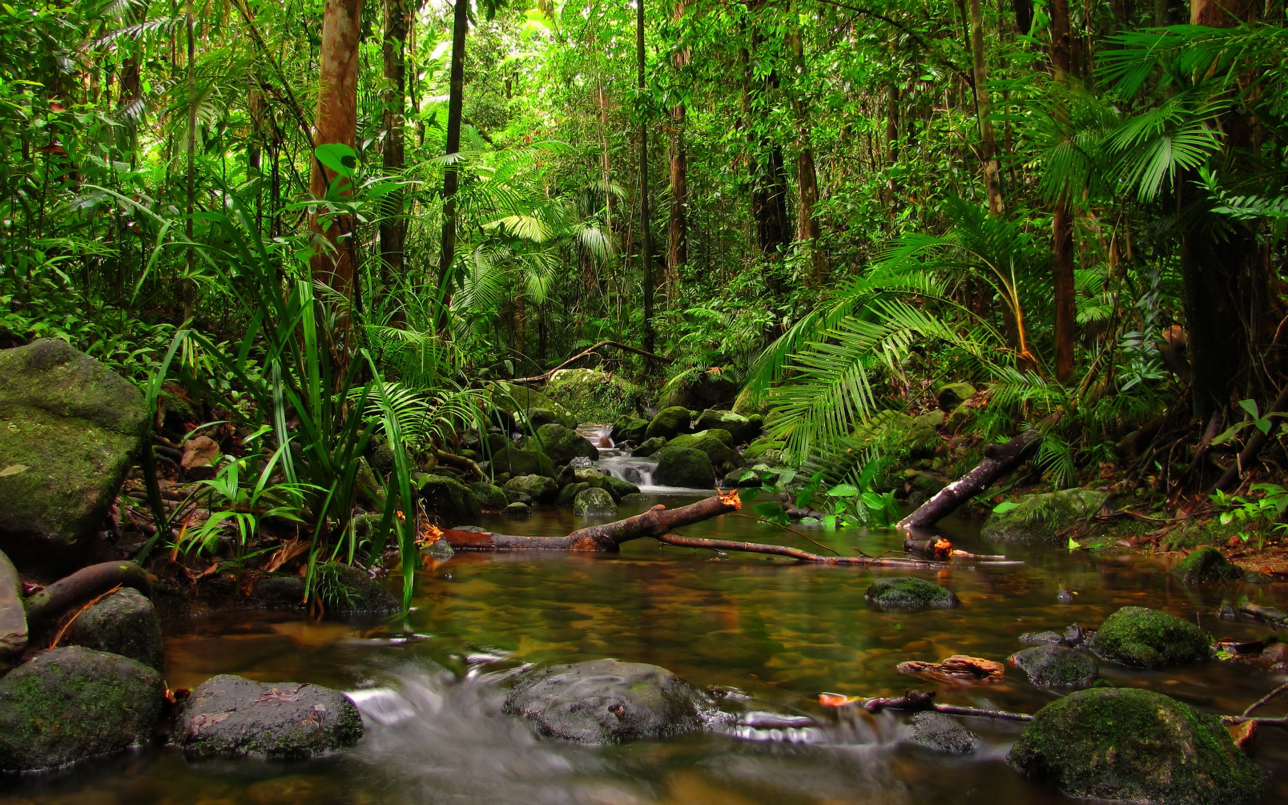 beautiful rainforest