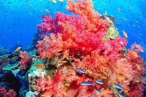 beautiful reef picture