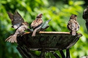 beautiful sparrows