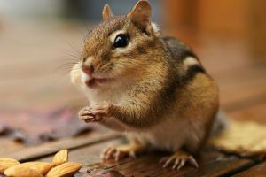 beautiful squirrel pictures
