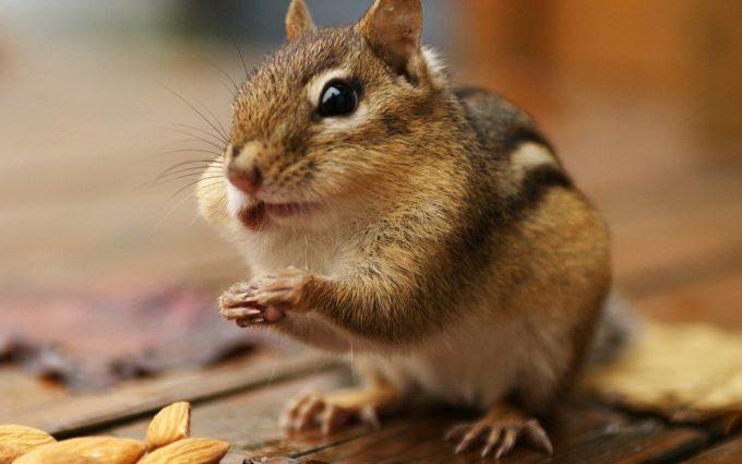 beautiful squirrel pictures