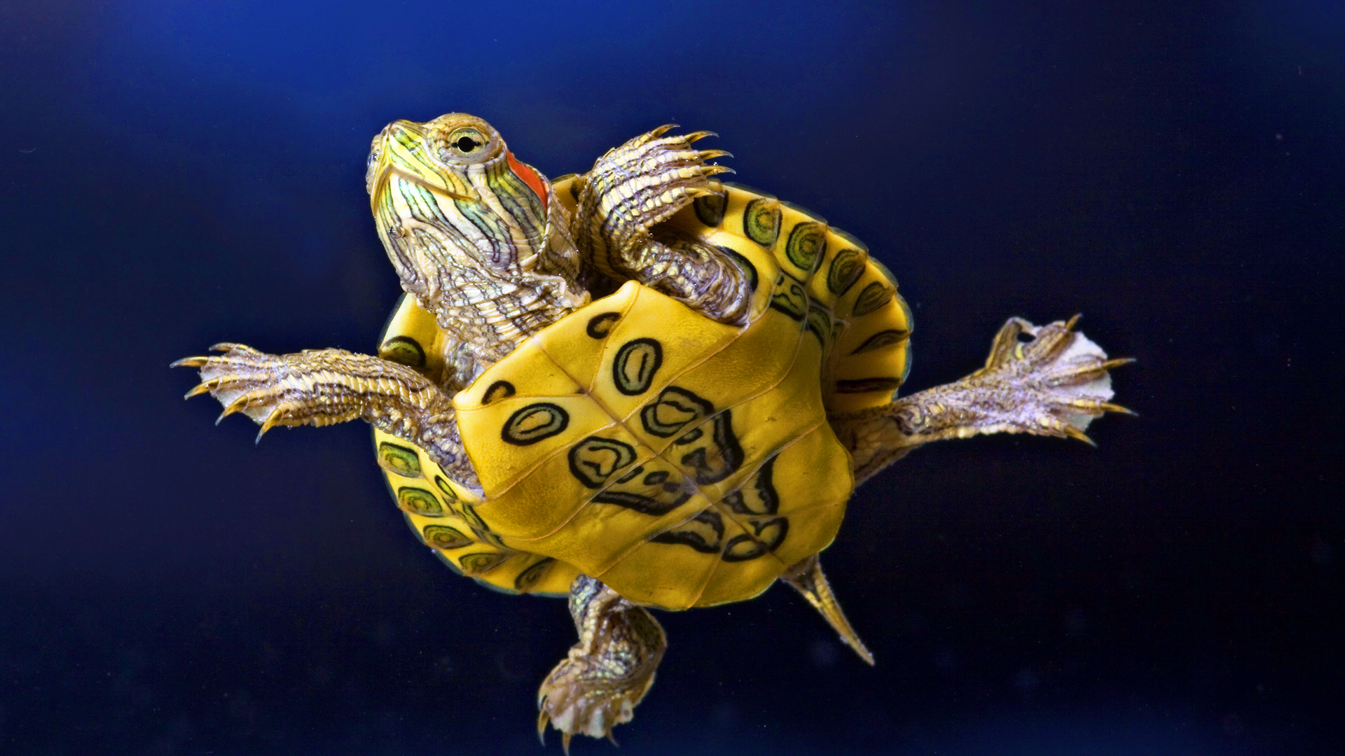 beautiful turtle pictures
