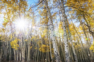 beautiful wallpaper aspen
