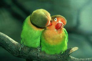 beautiful wallpaper birds