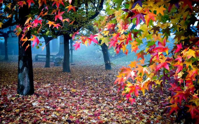 beautiful wallpaper colors