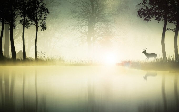 beautiful wallpaper fog