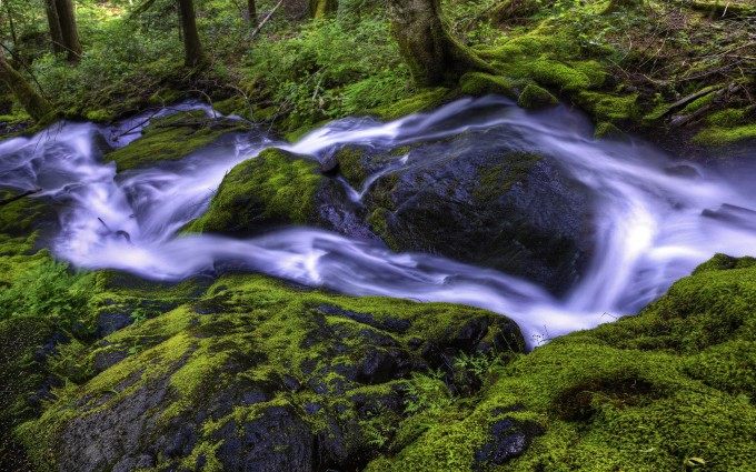 beautiful wallpaper forest stream
