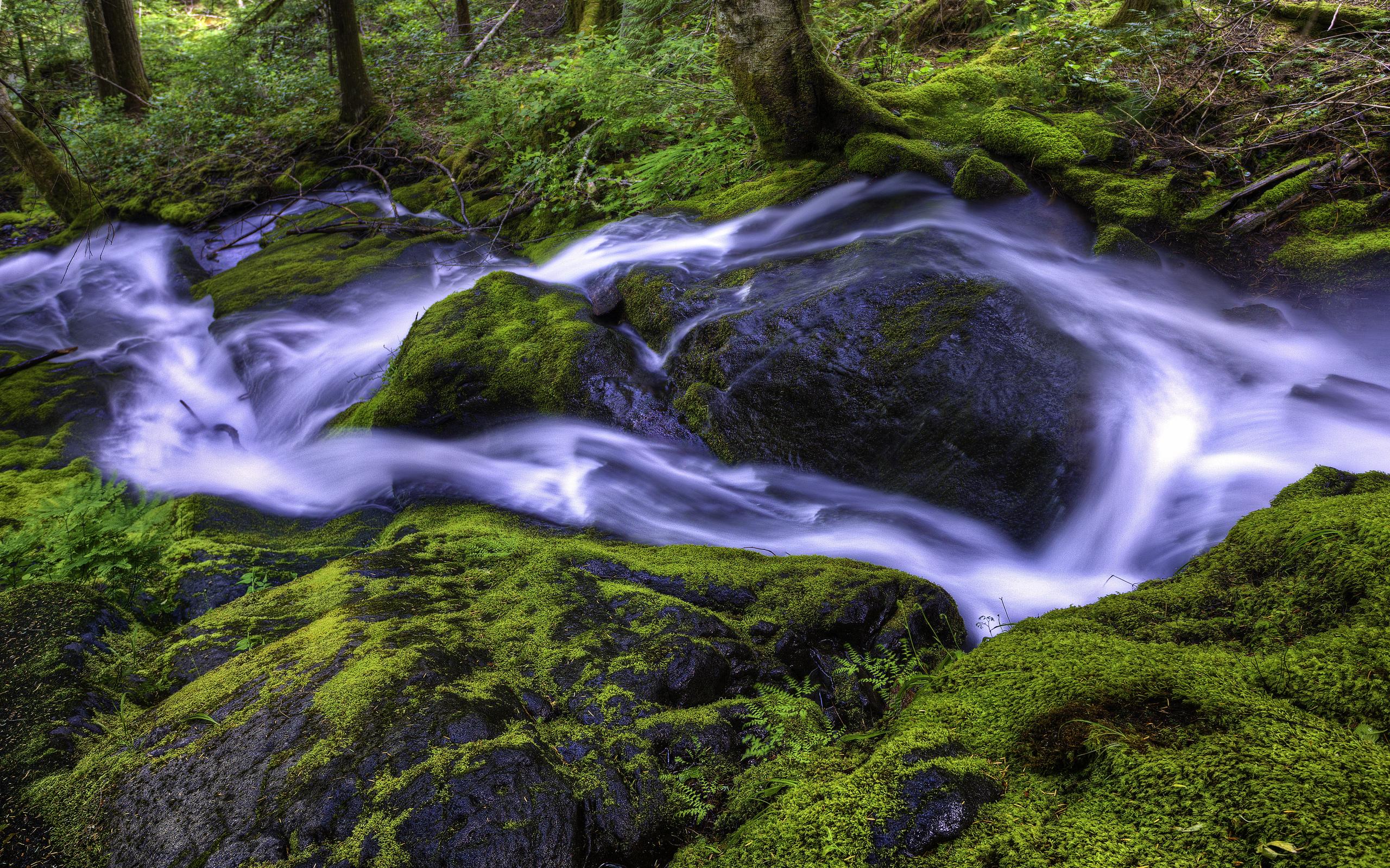 beautiful wallpaper forest stream