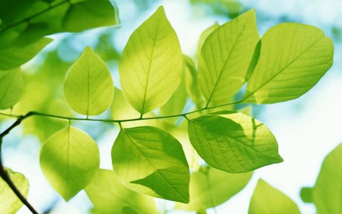beautiful wallpaper green leaves