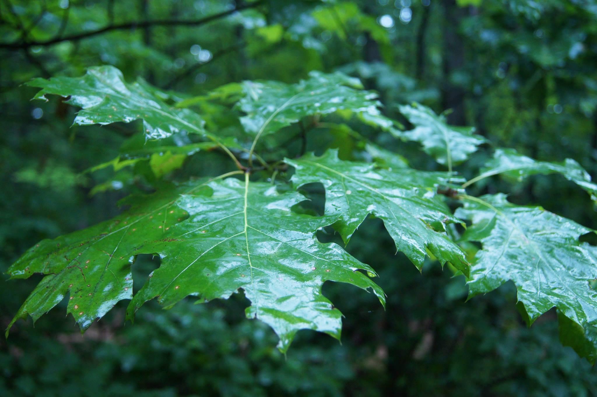 beautiful wallpaper leaves