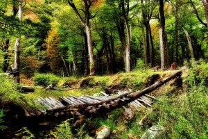 beautiful wallpaper thick forest