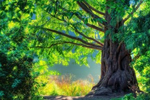 beautiful wallpaper tree nature