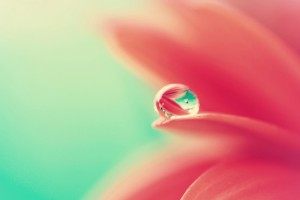 beautiful water drop wallpaper