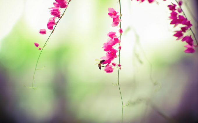 bee insect flowers