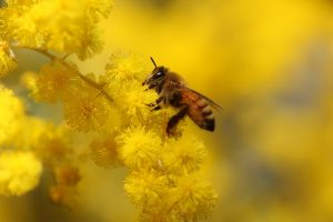 bee pictures hd