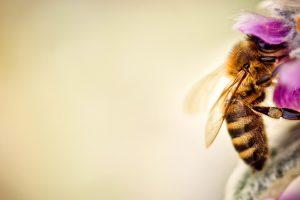 bee wallpaper free