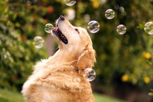 best dogs wallpapers