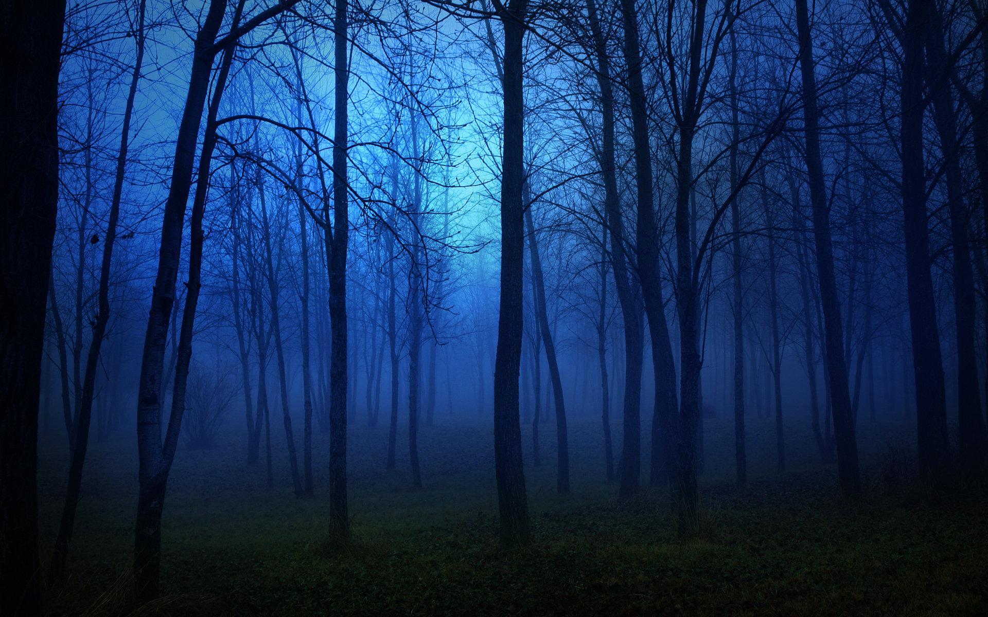 best wallpaper forest
