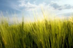 best wallpaper grass