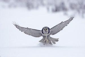 bird animal wallpaper
