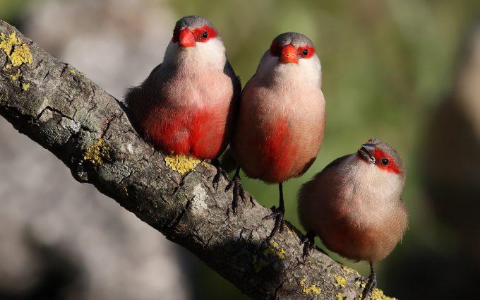 bird cute wallpaper