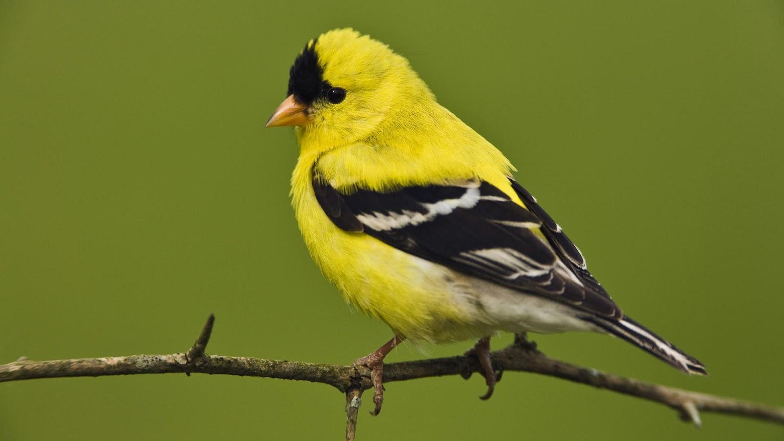 bird desktop wallpapers A6