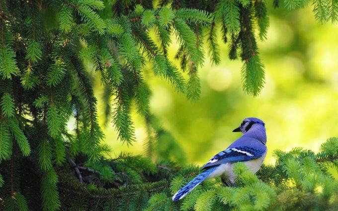 bird desktop wallpapers A7