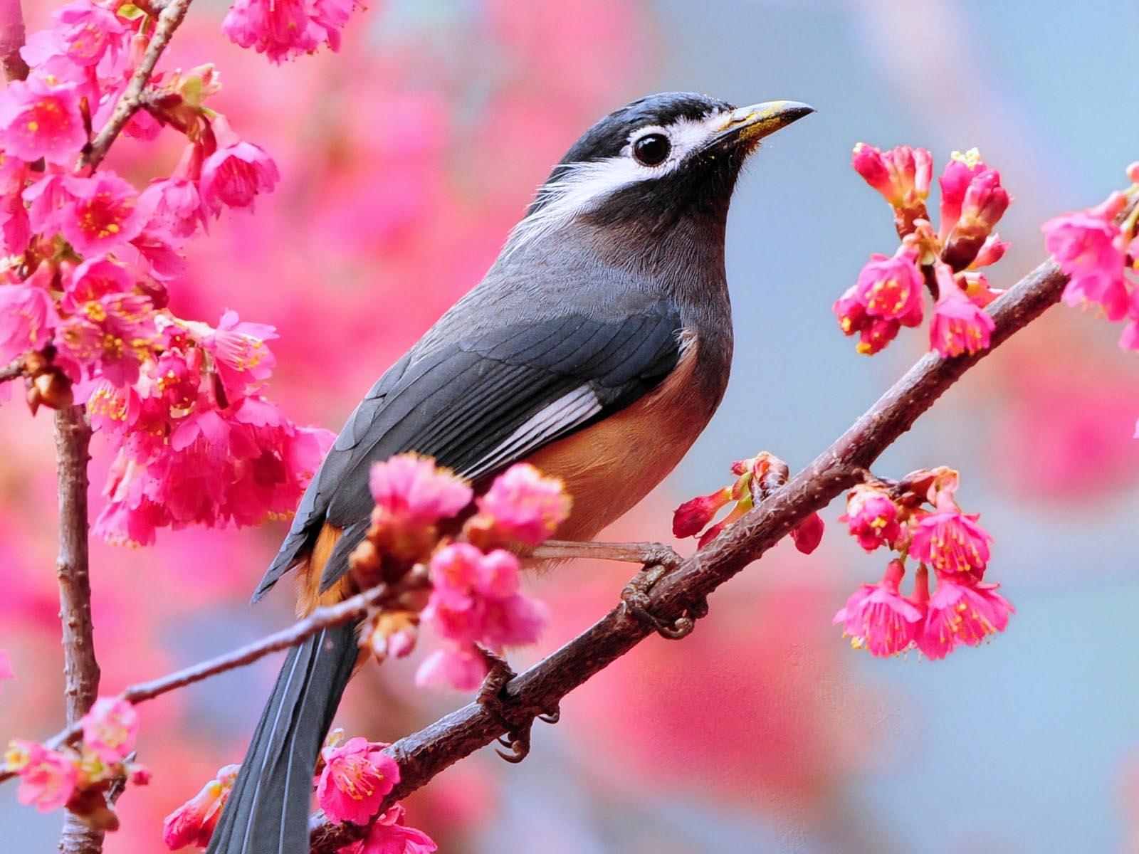 bird desktop wallpapers A9