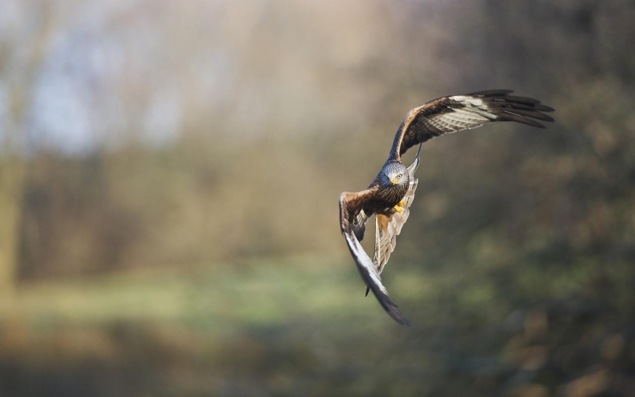 bird flying nice