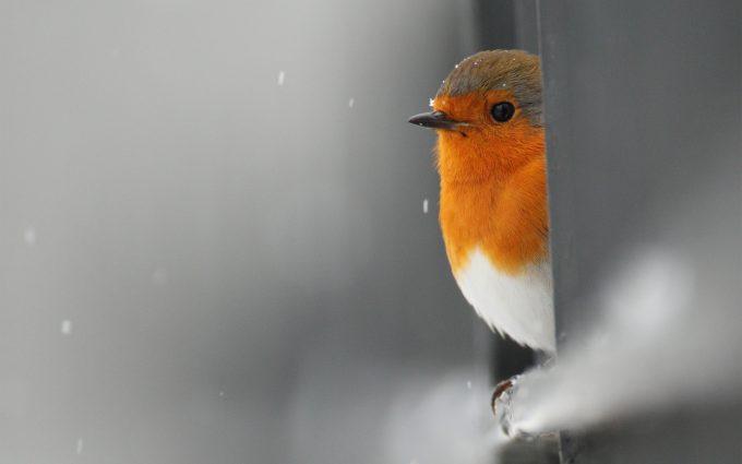 bird image wallpaper