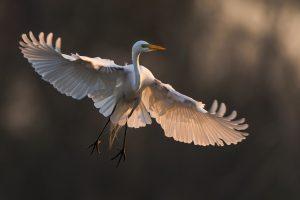 bird images hd