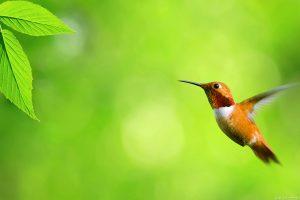 bird wallpaper backgrounds A3