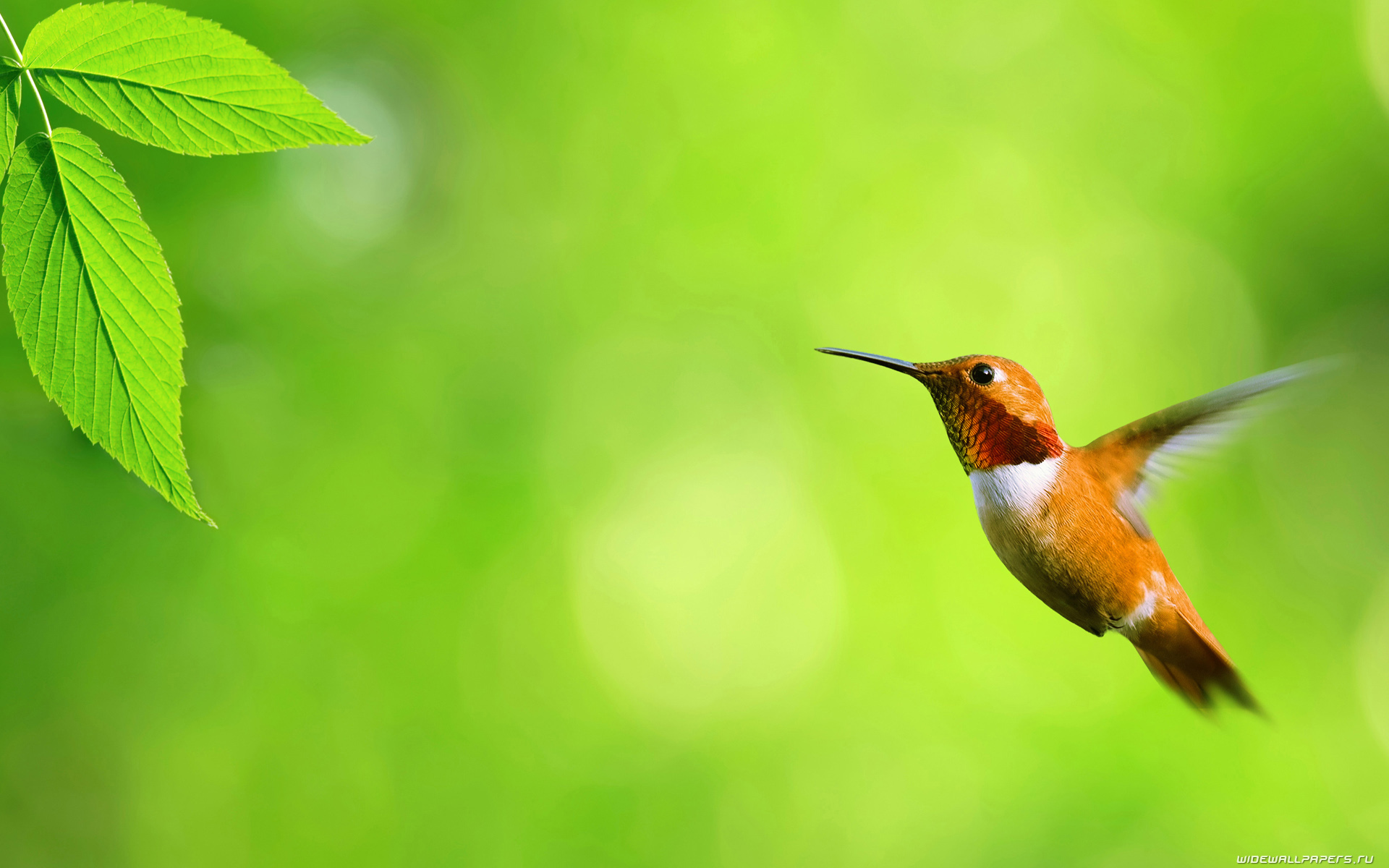 bird wallpaper backgrounds A3 HD Desktop Wallpapers 4k HD