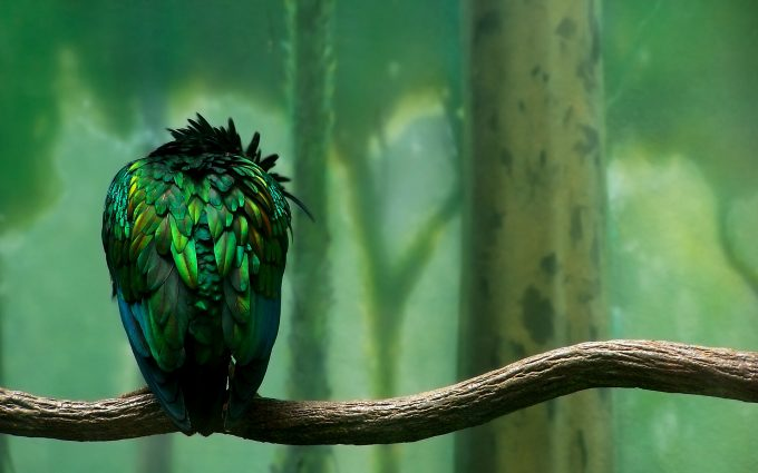 bird wallpaper backgrounds A4