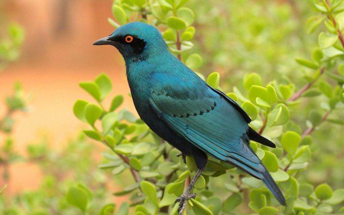 bird wallpaper blue