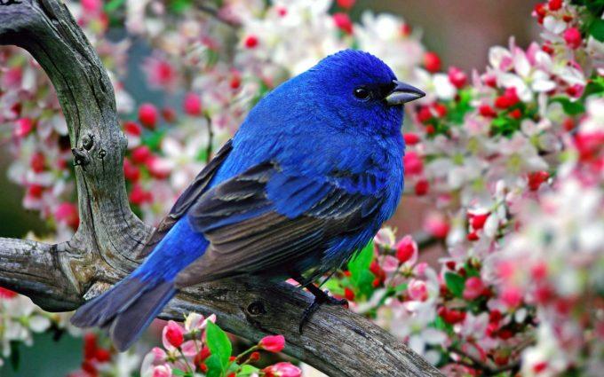 bird wallpaper downloads A10