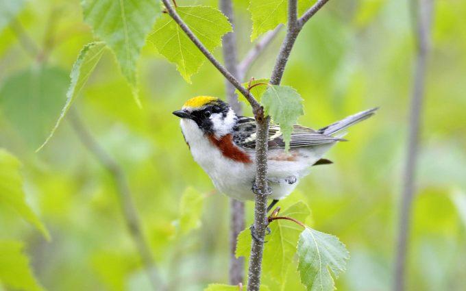 bird wallpaper downloads A2
