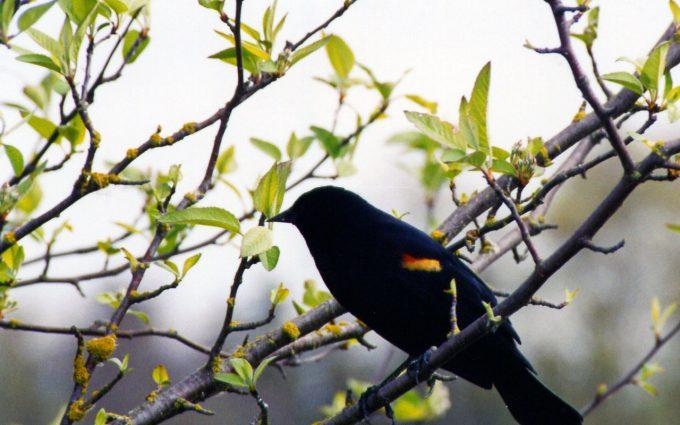bird wallpaper downloads A4