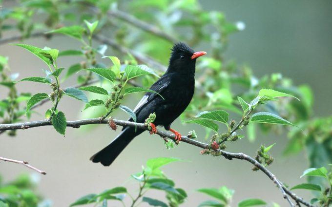 bird wallpaper downloads A5