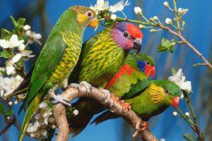 bird wallpaper downloads A6
