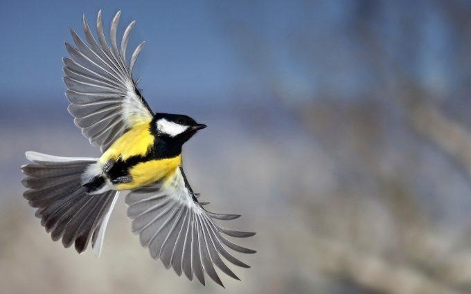 bird wallpaper downloads A7